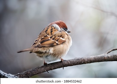 Small bird sparrow sitting on tree branch on winter nature background