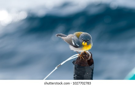 Small bird, species Northern Parula, image taken in south Florida.