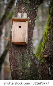 A small birdhouse, fastened to a tree trunk, provides shelter and nesting place for small birds.