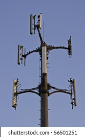 Small birds and nest on cell phone tower