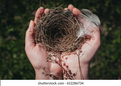small bird's nest is pierced with a branch on a background of blue sky.small bird's nest.bird's nest in women's hands
