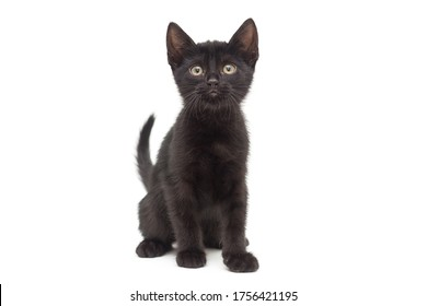 Small black kitten on a white background. Age of the kitten 2 months