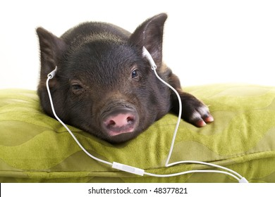 Small black pig lying down on a green pillow and listening to music through white headphones.