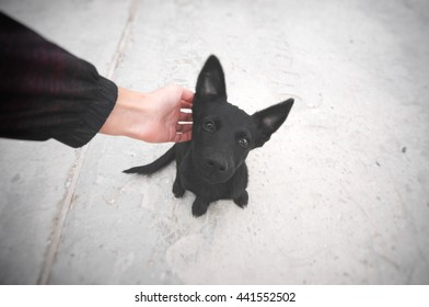 Small black puppy sitting on a road and looking at camera. Man scratching a dog. Pet and human friendship. Lost or homeless cur asking the man for help. Hungry animal asking for food.