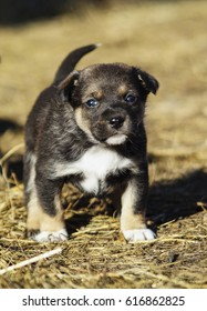 small black and white puppy standing on hay