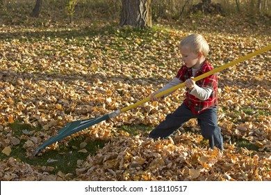 A small blonde boy using a big rake for leaves