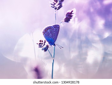 small blue butterfly sits on a summer gentle Sunny meadow in pastel colors and warm light