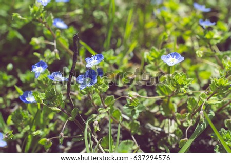 Small Blue Spring Flowers On Background Stock Photo Edit Now