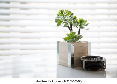Small bonsai planter in a modern bamboo vase, beside a stack of coasters, with bright white window blinds in the background