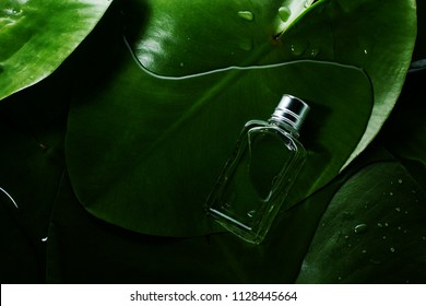 small bottle of perfume on a background of green leaves