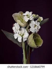 small bouquet of decorative flowers on a black background.