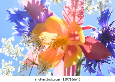 small bouquet of garden flowers, blue background, sunlight.