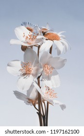 small bouquet of garden flowers, white flowers, gray-blue background.