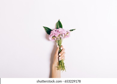 Small bouquet of pink carnations in a female hand with a manicure on a white background, close-up