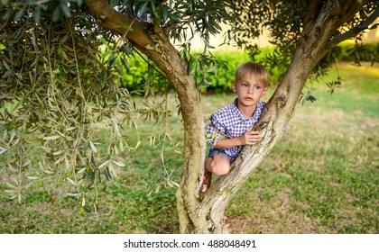 small boy sits on an olive tree