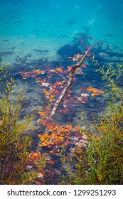 Small branch and leaves in lake Laghi di Fusine near Tarvisio in Italy on a sunny morning in autumn