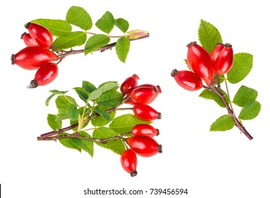 Small branches of wild rose with ripe briar fruits. Rosa canina. Group of decorative red rosehips with green leaves. Isolated on white background.