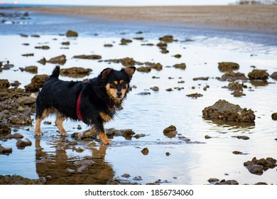 small-breed-dog-walking-on-260nw-1856734
