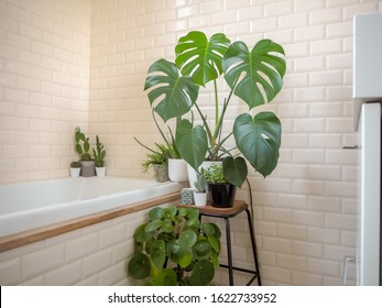 Small bright bathroom with subway tiles and a variety of green potted plants such as a pancake plant and swiss cheese plant creating an urban jungle