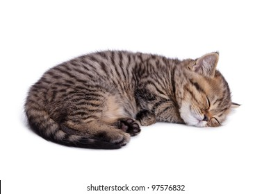 The small British kitten sleeps on one side. Isolatsd on white