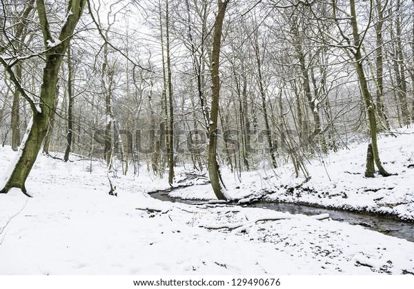 Small Brook in Burnham Beeches
