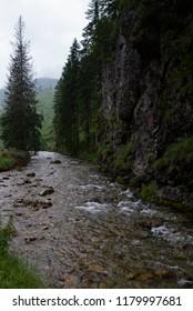 small brook in the valley of Koscielisko, Tatra Mountains, Poland