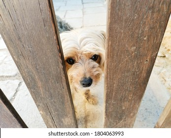 small brown dog is waiting behind wooden fence. Concept of lonelinessand friendship. Little Pet outside.