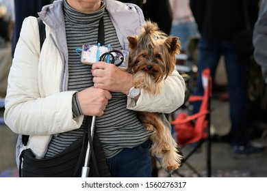 Small brown dog Yorkshire Terrier in the arms of a woman. An old woman with a bag and a mobile phone holds a shaggy dog in her arms. Pets on a walk.