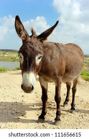 small brown donkey poses for the camera