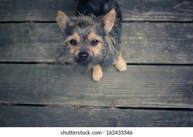 Norwich Terrier Outdoor Garden Dog Sign Hand Painted Figure Red
