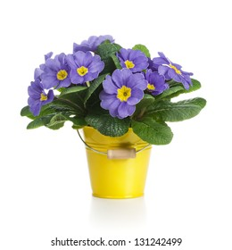 Small bucket of lilac primrose flowers on white background