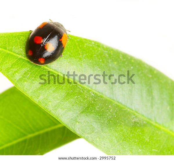 The small bug on a leaf of a plant...