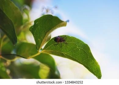 Small bug on vegetation closeup