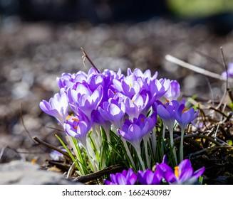small buket of flowers in spring