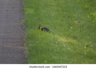 Small bunny running across the road