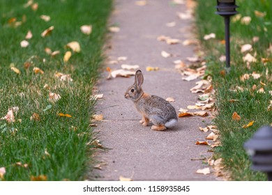 Small bunny running away