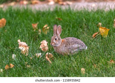 Small bunny surrounded for leaves