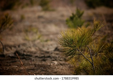 small-bush-some-pine-needles-260nw-17883