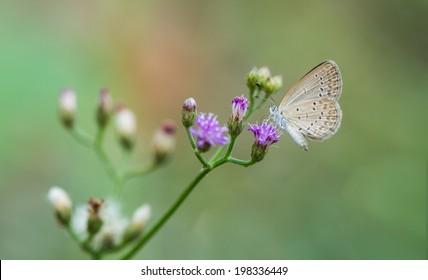 small butterfly seeking nectar on a flower