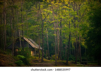 Small cabin in deep forest.