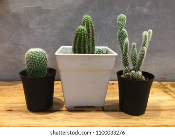 Small Cactus  decorate on wood table