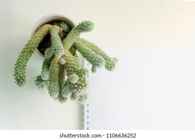 Small cactus plants in small pots with gravels in mix and various shape and various type, small cactus for background, selective focus, notebook view from above