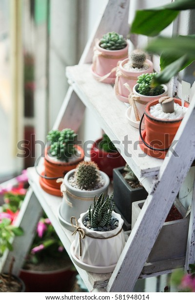 Small cactuses and succulents at the flower shop