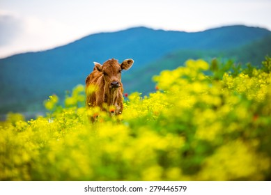 Small calf in mountains in Georgia, Caucasus