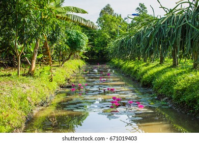 Small canal in Mekong Delta. Thickets on the banks of the river