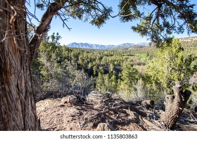 Small Canyon with Forest in Blanding Utah