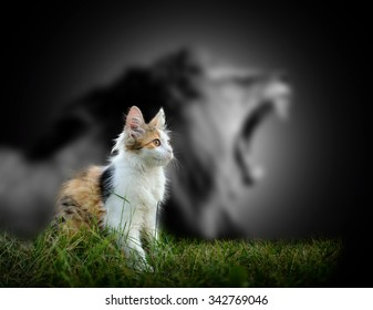 Small cat with big angry male lion shadow