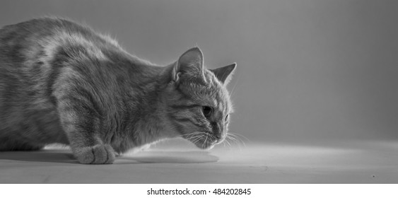 Small Cat in a Bright Studio Environment