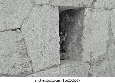 A small cat looks from a small space of a warrior fortification. Black and white picture of the photo.