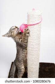 Small cat playing with a pink ball and isolated on white background